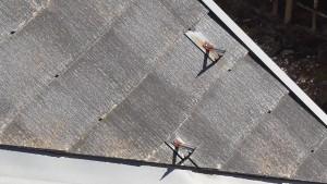 南面屋根4